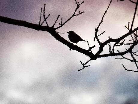 Silhouette of Bird in Tree