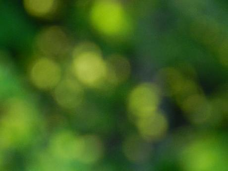 Green Bokeh Background