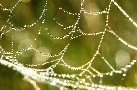 Dewdrops on Spider Web