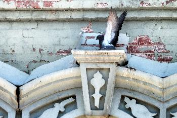 Pigeon on an Old Building