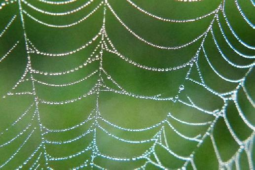 Dewdrops on Web