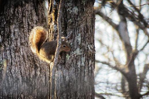 Squirel on a Tree Trunk
